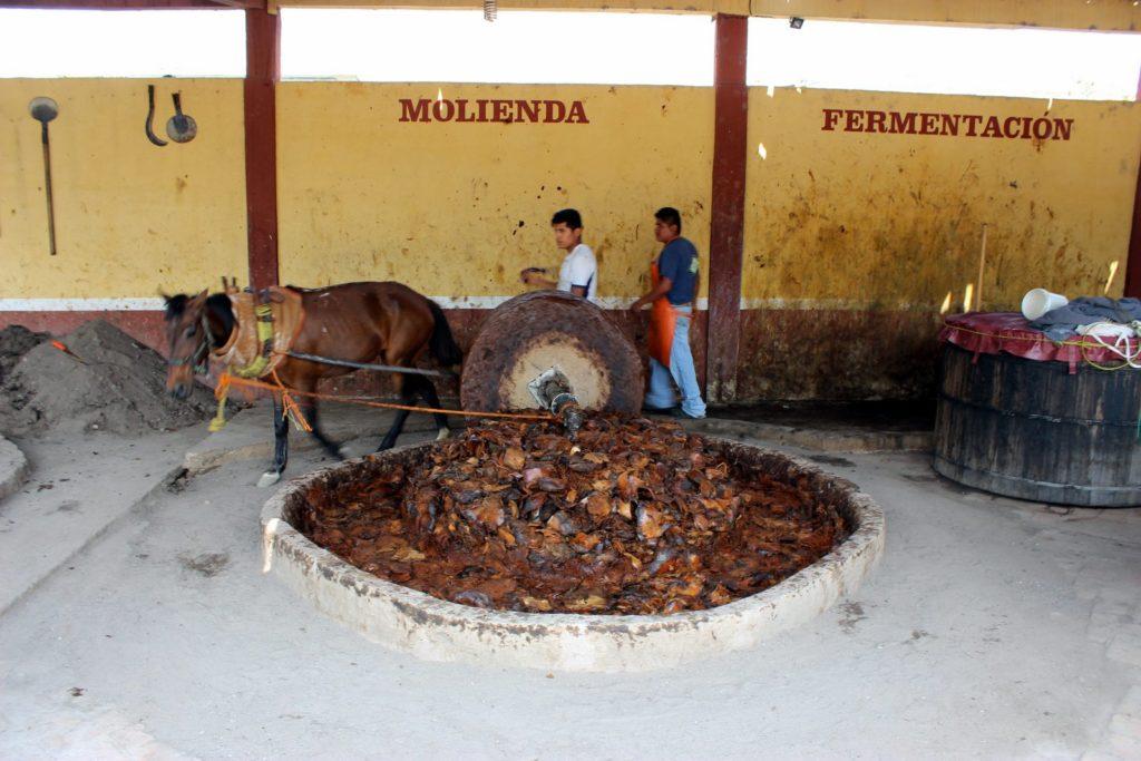 Фабрика мескаля процесс перемола сырья