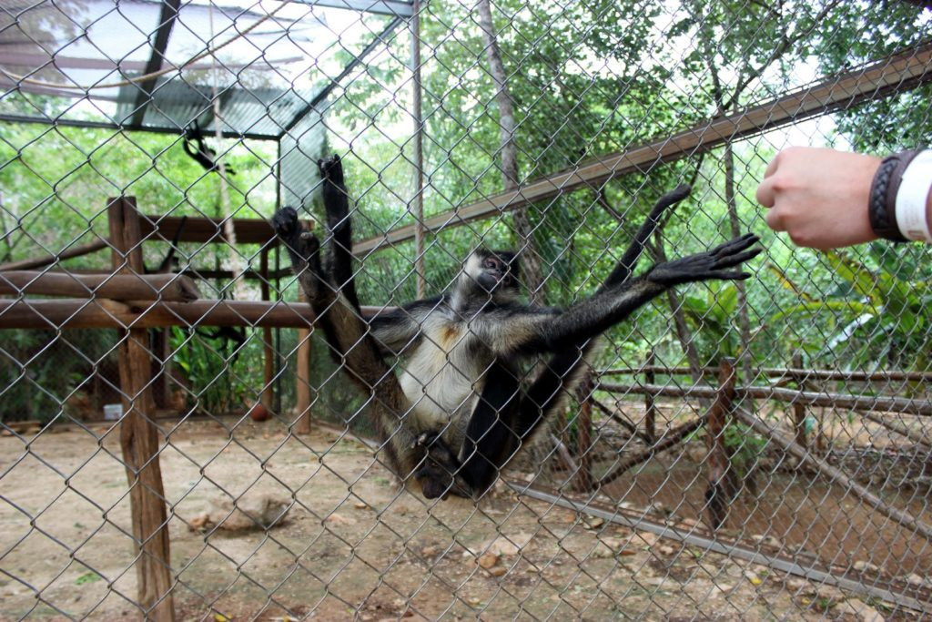 Частный зоопарк на территории какао-фермы