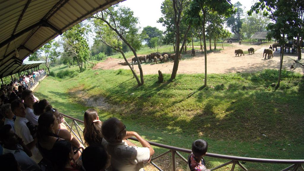 Питомник слонов.