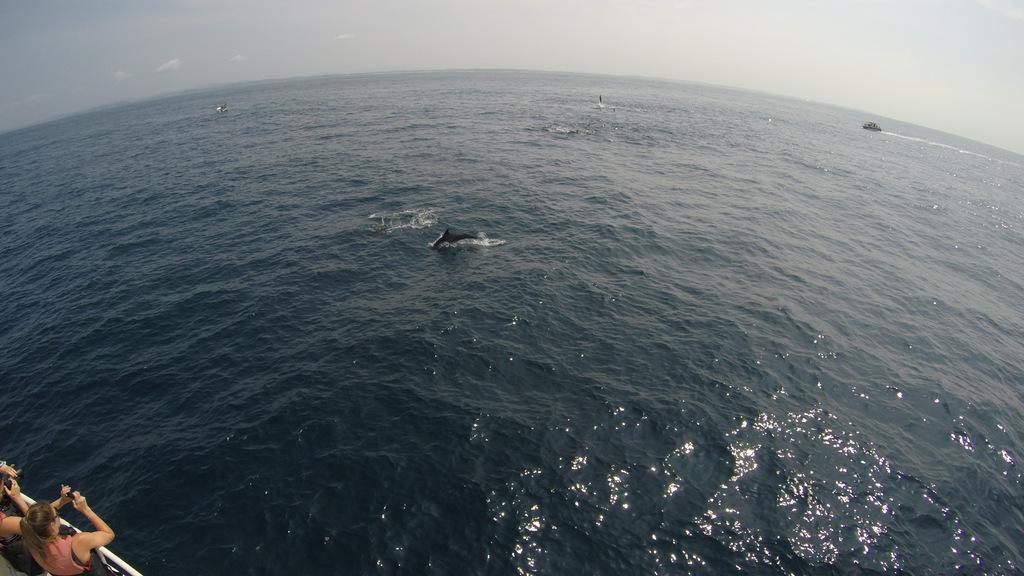 В поисках Китов