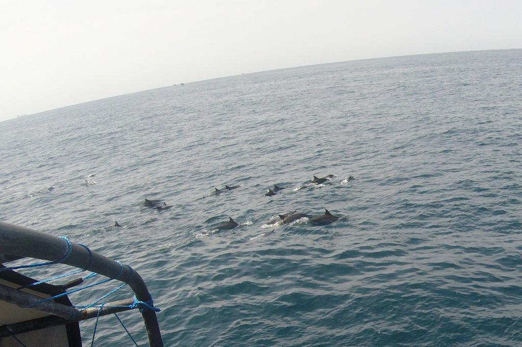 Дельфины часто трутся возле китов и кораблей