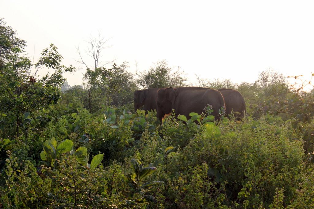 Слоновий национальный заповедник