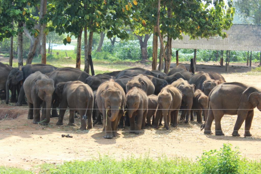 Питомник где заботятся о слонах